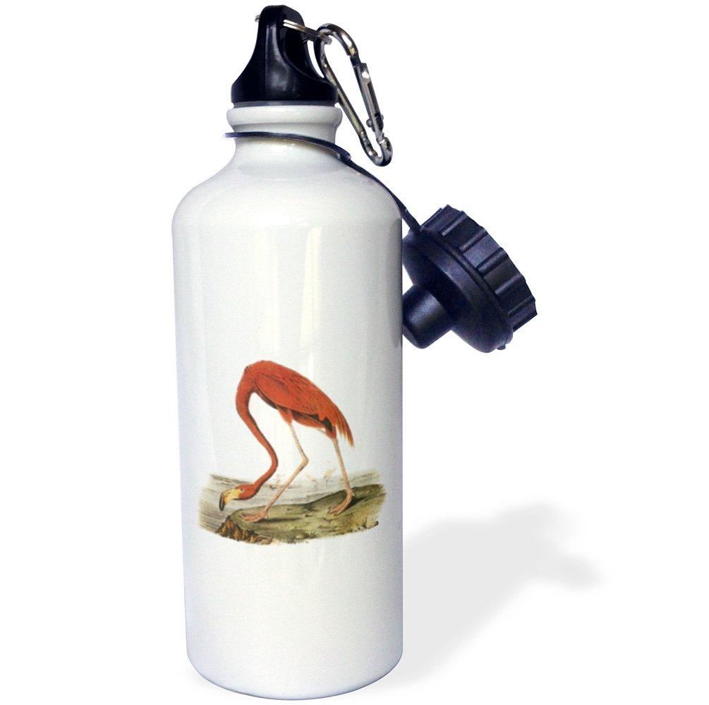 21oz Multicolored wb/_179018/_1 3dRose Pink Flamingo Vintage Bird-Sports Water Bottle
