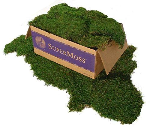 SuperMoss (21508) Preserved Sheet Moss, Fresh Green, 5 Pounds ()
