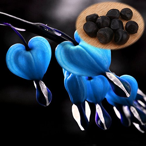 Delaman 10Pcs Heart Flower Seeds Perennial Spectabilis Herb Dicentra Bleeding Plant (Blue)