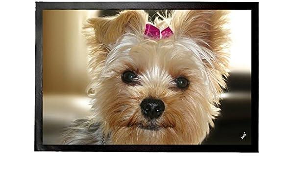 1art1® Perros - Yorkshire Terrier con Lazo Rosa Felpudo Alfombrilla (60 x 40cm): Amazon.es: Hogar