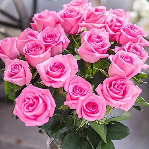 Colorful Rose hep Flower Seeds for Home Garden Yard Decoration, 50 Seeds (Pink Rose Seeds)
