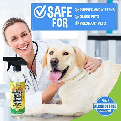 Amazoncom New Bitter Lemon Spray Stop Biting And Chewing For