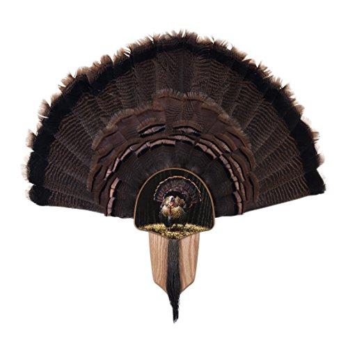 Walnut Hollow Country Turkey Fan Mount & Display Kit, Oak with Full Fan - Walnut Kit