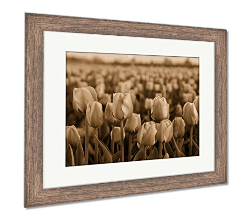 Pink Tulips Fields On Sunset, Wall Art Home Decoration, Sepia, 30x35 (Frame Size), Rustic Barn Wood Frame, AG6542011 ()