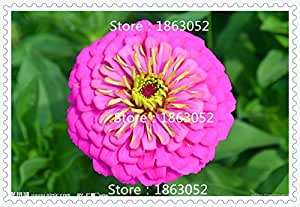 200 Mixed Zinnia Seeds Pretty Pastel Colors Annual Flower Seeds