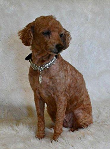 EXPAWLORER Black Fashion Jeweled Diamante Dog Cat Puppy Collars Necklace Style by EXPAWLORER (Image #4)
