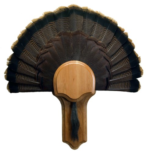 Walnut Hollow Country Deluxe Turkey Mounting & Display Kit in Premium Walnut