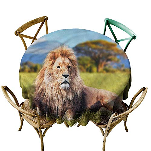 Round Tablecloth spillproof Lion,Beast Lying on Savannah Grass D54,for Bistro Table (Savannah Bistro)
