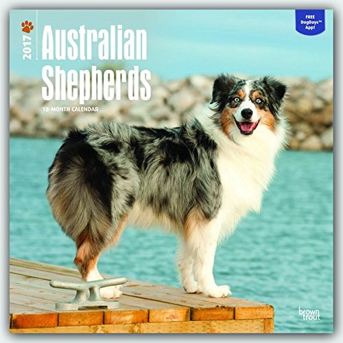 Australian Shepherds 2017 Square (Multilingual Edition) (Shepherd Calendar)