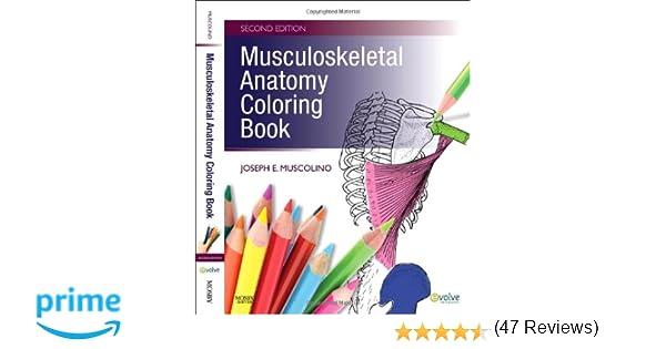 Musculoskeletal Anatomy Coloring Book, 2e: 8601400014356: Medicine ...