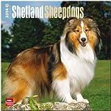 Shetland Sheepdogs Calendar, , 1465012591