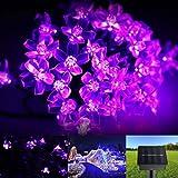Showking Peach Blossom Light String Solar LED Light 50pcs- Purple