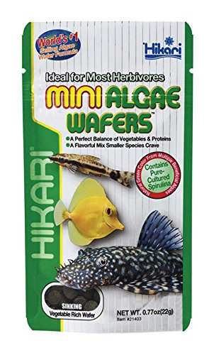 Hikari Usa Inc AHK21403 Mini Algae Wafers 0.77-Ounce