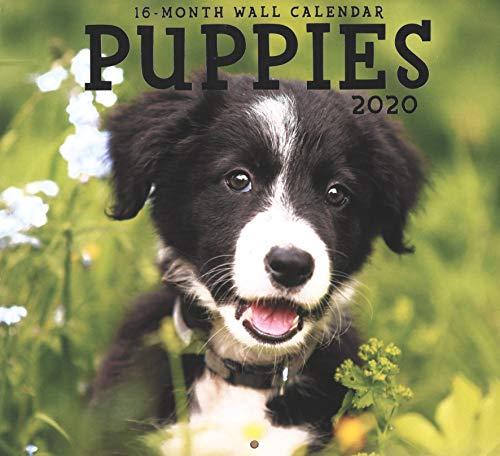 2020 Puppies Full-Size Wall Calendar