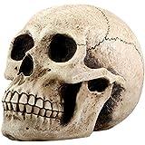 Skull Head Money Bank Display Decoration