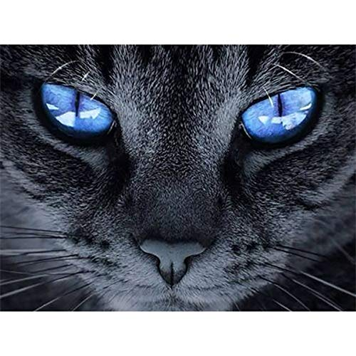 (DIY 5D Diamond Painting Full Round Drill Kits Rhinestone Picture Art Craft for Home Wall Decor Blue Eyes Black Cat 9.5x12.6In )