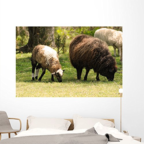 Navajo-churro Sheep Taylor-bray Farm Wall Mural by Wallmonkeys Peel and Stick Graphic (72 in W x 48 in H) WM214060
