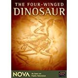 The Four Winged Dinosaur