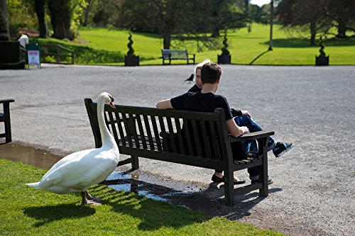 Swan Bench - Home Comforts LAMINATED POSTER Tourists Unwanted Visitors Swan Bench Seat Poster 24x16 Adhesive Decal