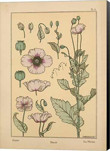 (Plate 04 - Poppy by Vintage Apple Collection Canvas Art Wall Picture, Museum Wrapped with Black Sides, 27 x 38 inches)