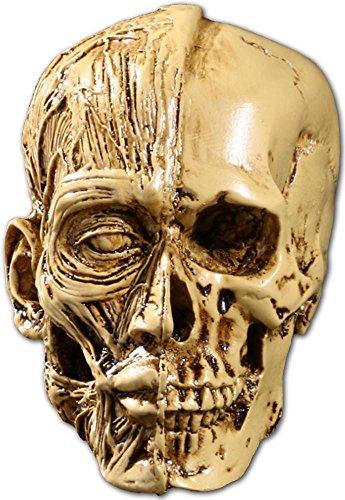 樹脂製マネキン/デッサン・美術用の人体模型/筋&骨