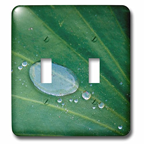 Danita Delimont - Leaves - California, Santa Barbara, Summer Solstice Reception, lotus leaf - Light Switch Covers - double toggle switch - Santa Solstice Barbara