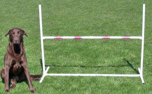 Affordable Agility Practice Adjustable Jump