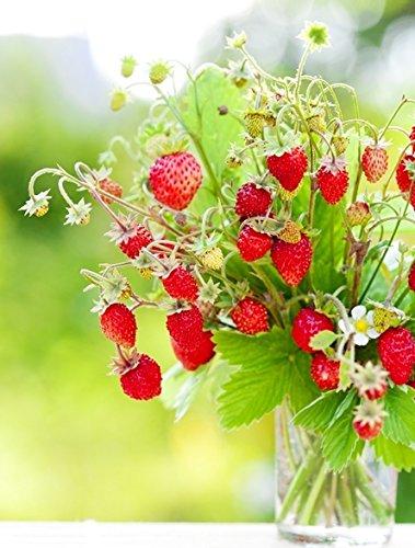 Wild Strawberry Regina seeds - Fragaria vesca (Wild Strawberries Seeds)