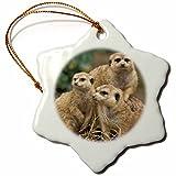 3dRose orn_83592_1 Africa Southwest African Meerkat Wildlife NA02 AJE0279 Adam Jones Snowflake Porcelain Ornament, 3-Inch