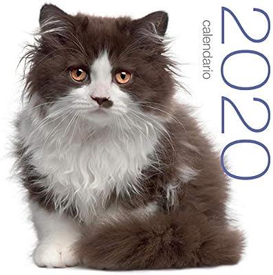 Gatos. Calendario 2020 de pared.: Amazon.es: Oficina y papelería