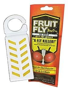 Amazon.com : Fruit Fly BarPro 1 Strip (Single Site