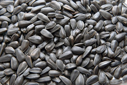 CountryMax Black Oil Sunflower Seed for Wild Birds 50 LBS ()