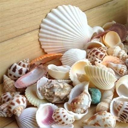 Gilroy 100g Mixed Sea Beach Shells Crafts Seashells Garden Aquarium Decor  Photo Props