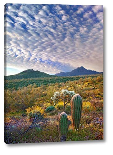 (Saguaro and Teddybear Cholla amid Flowering Lupine and California Brittlebush - 2 by Tim Fitzharris - 26
