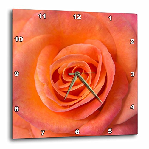 3dRose Danita Delimont - Flowers - USA, Oregon, Portland. Orange rose close-up. - 10x10 Wall Clock (dpp_259866_1)