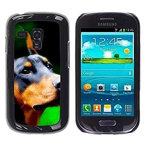 TopCaseStore / la caja del caucho duro de la cubierta de protección de la piel - Doberman Pinscher Canine Dog Breed - Samsung Galaxy S3 MINI NOT REGULAR! I8190 I8190N