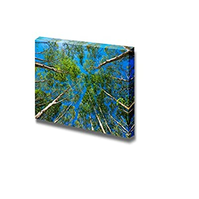 Beautiful Scenery Landscape Uprisen Angle of Rubber Trees Against Blue Sky - Canvas Art Wall Art - 24