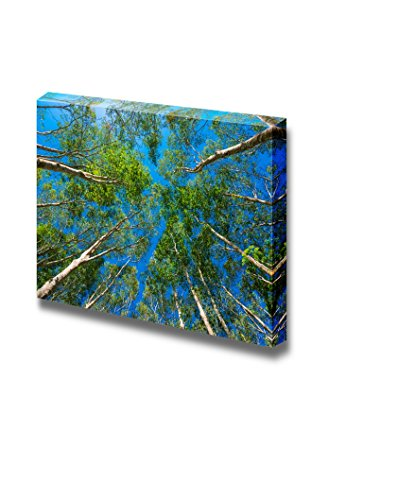 Beautiful Scenery Landscape Uprisen Angle of Rubber Trees Against Blue Sky Wall Decor ation