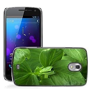 Etui Housse Coque de Protection Cover Rigide pour // M00152898 Antecedentes de la haba verde Fresh // Samsung Galaxy Nexus GT-i9250 i9250