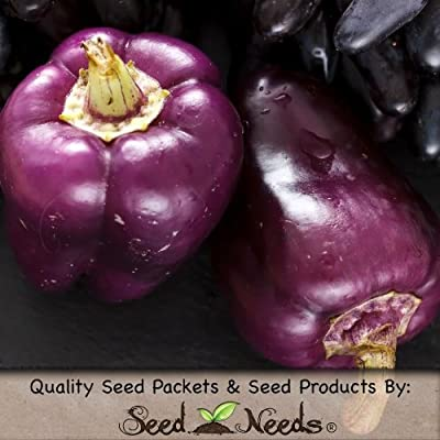 Package of 100 Seeds, Purple Beauty Bell Pepper (Capsicum annuum) Non-GMO Seeds by Seed Needs