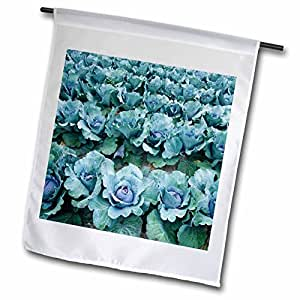 Danita Delimont - Farms - Cabbage, Harlow Farm, Westminster, Vermont - US46 JMO0326 - Jerry and Marcy Monkman - 12 x 18 inch Garden Flag (fl_95022_1)