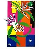 Reproduction d'art 'Danseuse créole', de Henri Matisse, Taille: 40 x 50 cm