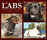 Just Labs 2018 Calendar: One Breed, Three Colors, Countless Personalities