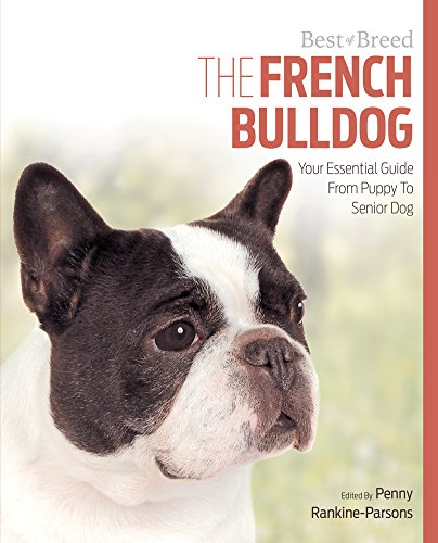 French Bulldog Your Essential Guide From Puppy To Senior Dog