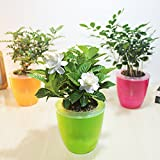 Mkono 3 Pack Self Watering Planter Plastic Flower Pot, Random color M