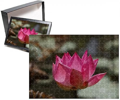 photo-jigsaw-puzzle-of-wat-14797-indian-lotus-sacred-lotus-bean-of-india-sacred-waterlily