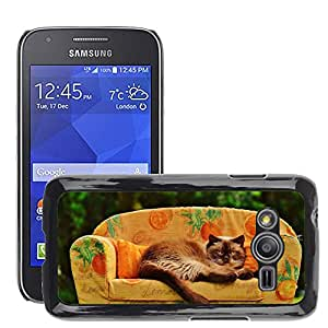 Super Stella Slim PC Hard Case Cover Skin Armor Shell Protection // M00103747 Sofa Couch Cat British Shorthair // Samsung Galaxy Ace4 / Galaxy Ace 4 LTE / SM-G313F