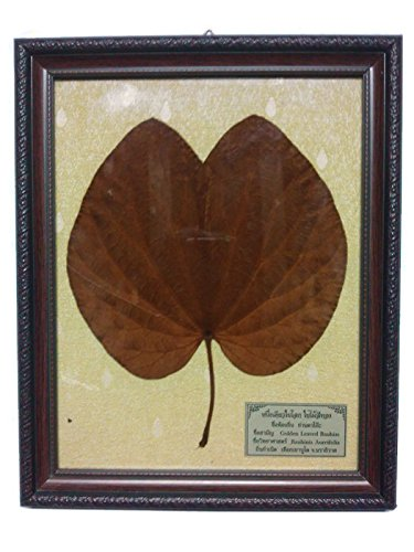 Thai Golden Leaf in Wood Frame (4) by Thai Golden Leaf
