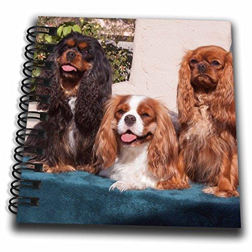 Spaniel Notepad - 3dRose db_258253_3 Trio of Cavalier King Charles Spaniel Posing, MR Mini Notepad, 4