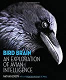 Bird Brain: An Exploration of Avian Intelligence